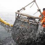 """Acusan a funcionarios de Imarpe de haber """"inflado"""" cuota de pesca de anchoveta"""
