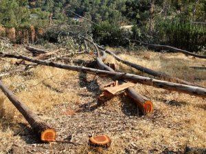 La deforestación perjudica considerablemente al planeta
