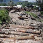 Capacitarán a comunidades nativas para verificar legalidad de la madera