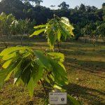 Potenciarán agricultura amazónica con nuevos laboratorios y semillas