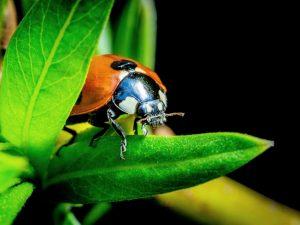 Reducción de pequeños depredadores preocupa al mundo científico