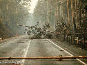 Las razones de los incendios en Australia