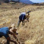 Incrementa 3,2% el sector agropecuario del Perú