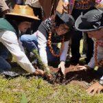 Junín: Instalan plantones forestales para prevenir lluvias y heladas