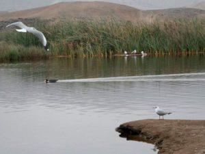 Día Mundial de los Humedales pone el foco en la pérdida de biodiversidad