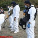 México: Encuentran fosa clandestina con doce cadáveres en Michoacán