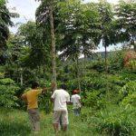 Minam aprobó la primera Zonificación Forestal del Perú