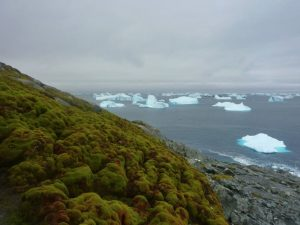Investigan las causas del 'enverdecimiento' del Ártico