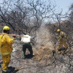 Lambayeque: Sofocan incendio forestal en Jotoro