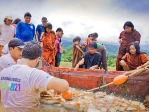 Vraem: Asháninkas de Shimabenzo inician cosecha de peces amazónicos