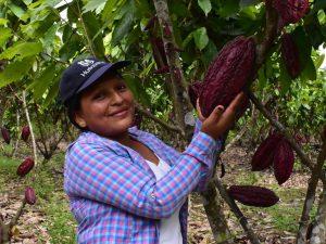 Agentes tecnológicos: Conocimiento y acción para mejorar la producción de cacao en Huánuco