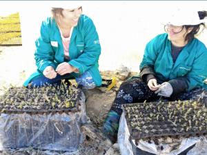 El timo y el azafrán empoderan a las mujeres del Alto Atlas de Marruecos