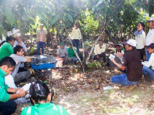 Huánuco: Optimizarán cultivos de 961 familias agricultoras del Monzón