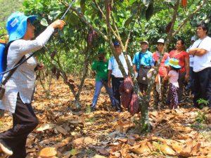 Huánuco: Asesoran a cacaoteros para controlar plagas y enfermedades