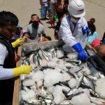 Decomisaron 100 toneladas de recursos pesqueros en el febrero