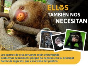 Inician campaña a favor de la fauna silvestre que vive en centros de cría