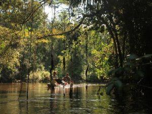 Un mayor conocimiento de la Amazonía fortalecería combate contra las pandemias