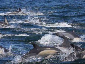Océano Índico sin delfines