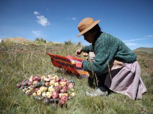 Se necesitaría S/ 5 mil millones para salvaguardar la agricultura en el Perú