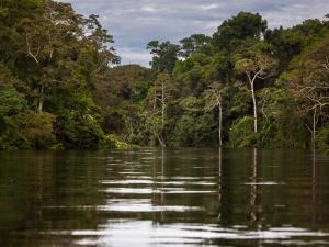 Alistan iniciativas para la reactivación del sector forestal en Ucayali