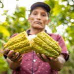 Invierten S/ 3 millones para impulsar producción de café y cacao en Satipo