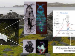 Antartida: Identifican insecto capaz de ingerir plástico