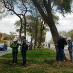 Proponen invertir en la forestería urbana