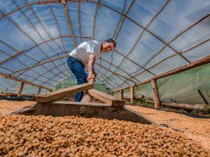 Huánuco: Agricultores venden más de 55 toneladas de café a los EE.UU.