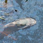 Loreto: Investigan contaminación en el río Itaya
