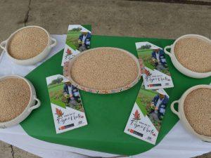 50 mil agricultores elevan producción de quinua con semillas de calidad genética