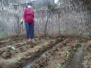 """Ancash: Implementan biohuertos familiares en """"Puerto Huarmey"""" y """"Nueve de Octubre"""""""