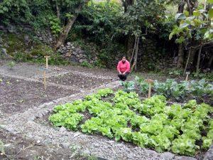 Huancavelica: Implementan tecnologías productivas en cultivos andinos
