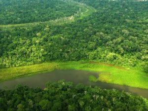 Deforestación en Amazonía peruana se redujo en más de 28 % durante cuarentena