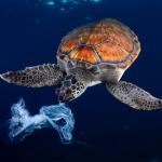 Cada año se vierten 100 millones de toneladas de plásticos a la naturaleza