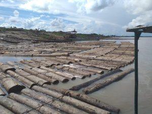 Inmovilizan 10 000 pies de producto forestal maderable en Ucayali