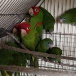 Tráfico ilegal de fauna silvestre se desarrolla en redes sociales