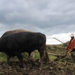 Dan recomendaciones para el cuidado del ganado durante temporada de invierno