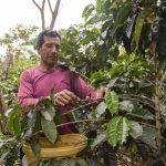 Minagri fortaleció productividad de 286 mil hectáreas de cultivo con semillas certificadas