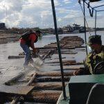 Intervienen 568 trozas de producto forestal maderable en el río Ucayali