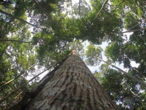 El Perú prosigue implementación de cuenta satélite forestal