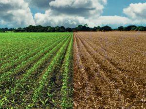Malas prácticas agrícolas y el cambio climático