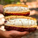 San Martín: Comercializan cacao por más de S/ 2 millones en el primer semestre del año