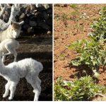 Bajas temperaturas afectan al agro de la sierra central y meridional