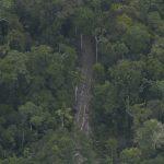 Piden paralizar concesiones forestales que afecten reservas para aislados