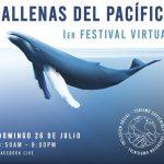 """Realizarán primer festival virtual """"Ballenas del Pacífico"""""""