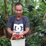 San Martín: Diseñan planes estratégicos para organizaciones de café