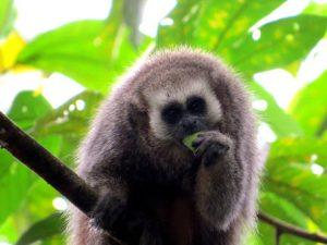 Gran Mirador de Juningue de San Martín protege 170 especies