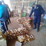 Piura: Intervienen casa donde procesaban producto forestal ilegal