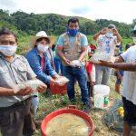 San Martín: Piscicultores de Uchiza iniciaron primera cosecha de tilapia