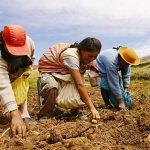 Minagri lanzó Catálogo Virtual de Productos Agrarios